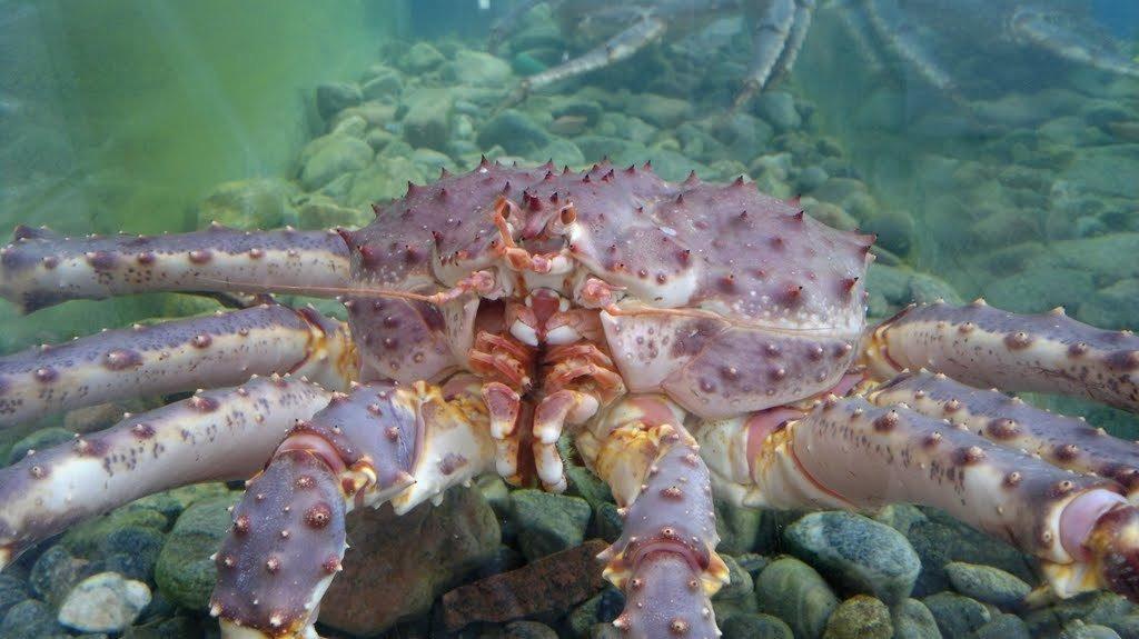 壁纸 海底 海底世界 海洋馆 水族馆 1024_575