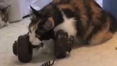 Cat Listening Party
