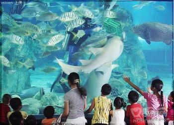 重庆兴澳海底世界让您漫游海底的梦想成真!