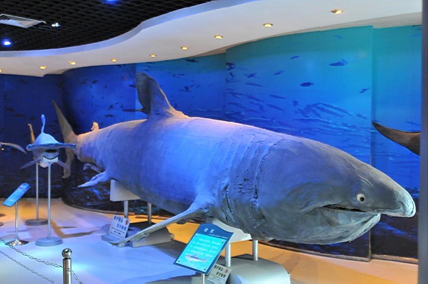 壁纸 动物 海底 海底世界 海洋馆 水族馆 鱼 鱼类 858_570