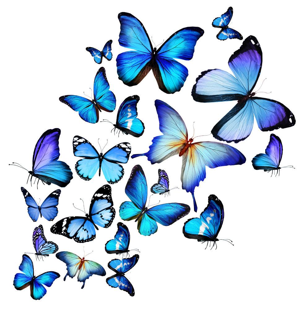 动画步骤图蝴蝶