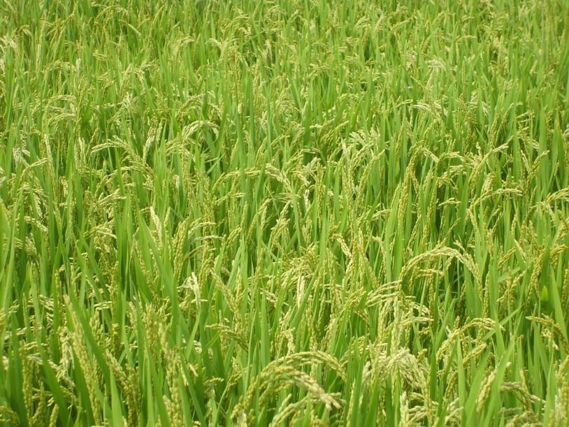 积极转变农业结构调整的工作