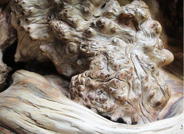 村民砍柴捡到一根奇怪的木头,在市场上十分受欢迎,售价达十几万 - 周公乐 - xinhua8848 的博客