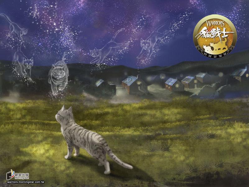 猫武士沙风之死图片