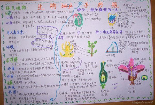"""""""生物手抄报 初一上册植物的生长和繁殖图片""""相关的详细问题如下图片"""