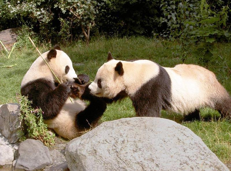 熊猫6160电路图